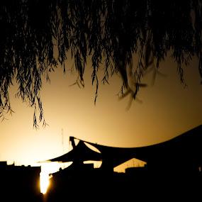 by Niloofar Rezaee - Landscapes Sunsets & Sunrises