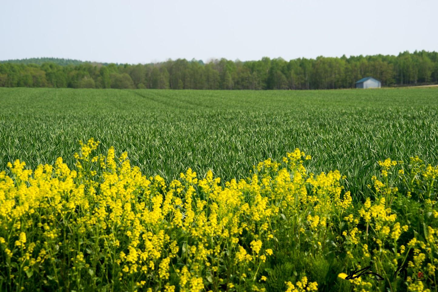 緑と黄色の鮮やかな季節
