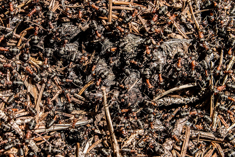 Il formicaio di Jiggly