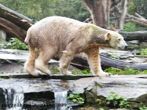 Photo: Knut ist schon auf dem Weg ;-)