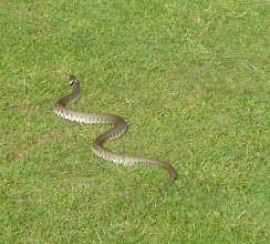 Photo: Snake on the 7th !