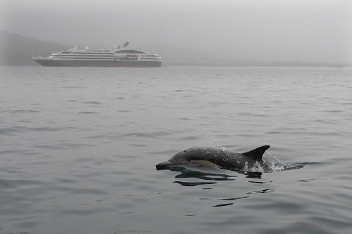 Ponant-cruise-mammal.jpg - See orcas and wildlife on a luxury expedition cruise from Ponant.