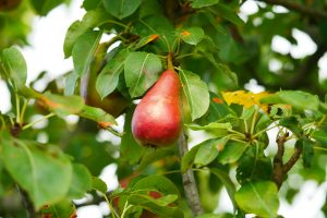 Principles of plant health