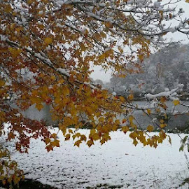 by Jackie House - Landscapes Weather