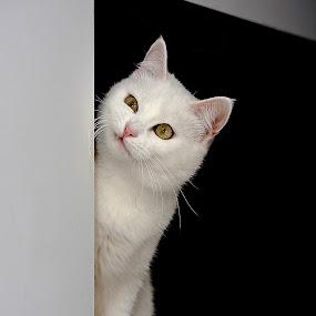 Think You are God? by Dmitriev Dmitry - Animals - Cats Portraits ( cat, belarus, white, minsk, portrait, eye, eyes,  )