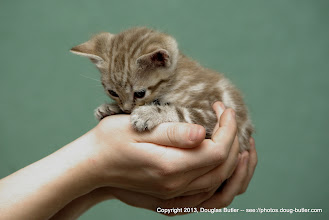 Photo: Look at those gorgeous hands!  The kitten's kinda cute, too  :-)