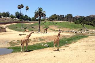 Photo: San Diego Zoo Safari Park http://ow.ly/caYpY