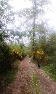 passeggiando nella macchia.... di Nikaele
