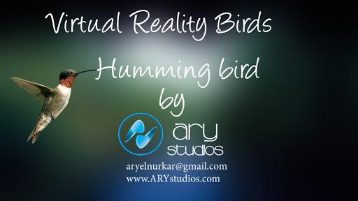 3D VR Humming Bird