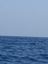 Photo: 鳥は今日も活発です! ・・・たまに水面に「バシャッ」って出てます。