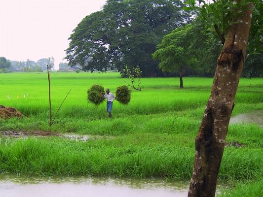 Contadino birmano di Ciotta
