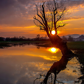 The completion of the day by Tomaž Mikec - Landscapes Sunsets & Sunrises ( clouds, reflection, tree, sunset, sun )