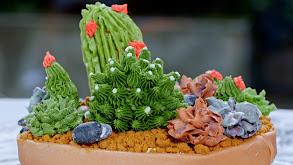 The Plant-Based Succulent Cake thumbnail