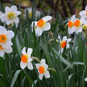 4-2-15 flowers wkbg spring 6.jpg