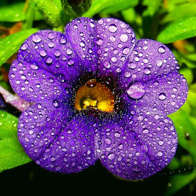 by John Geddes - Nature Up Close Flowers - 2011-2013
