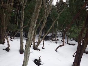 スノーシューを履いて雪道を進む