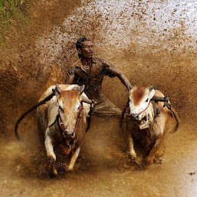PACU JAWI by Romi Febrianto - Sports & Fitness Rodeo/Bull Riding
