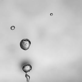 Water drops b&w by Brigitte Dechow - Uncategorized All Uncategorized (  )