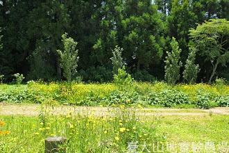 Photo: 拍攝地點: 梅峰-白楊步道 拍攝植物: 貓兒菊 拍攝日期:2013_07_05_FY