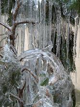 Photo: sopel lodu w nabrzmiałej kropli wody drży słońce