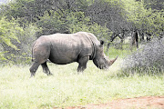 The Botswana environment ministry said two rhinos were poached within five days in the Okavango late last month, raising the total number to nine since April.