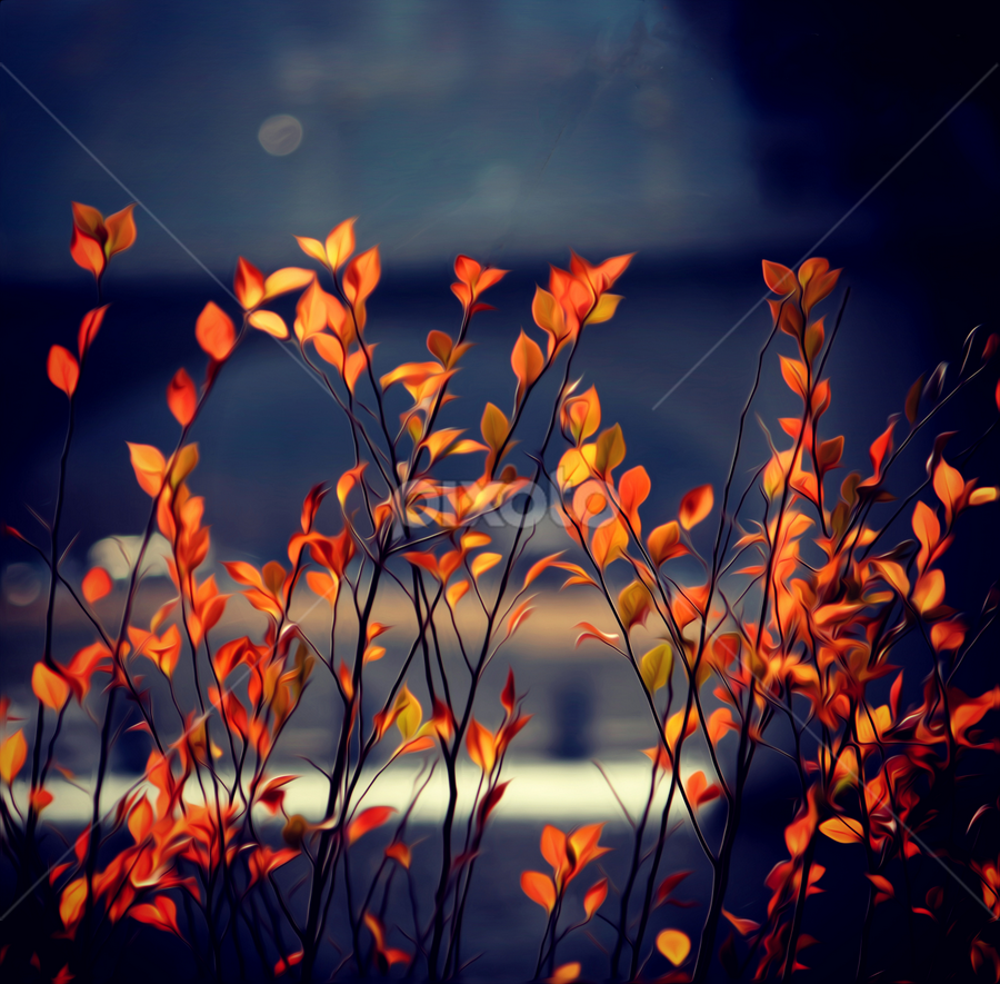Fall Leaves by Jermaine Pollard - Nature Up Close Trees & Bushes ( #fall #chattanooga #orange #leaves #september #blue,  )