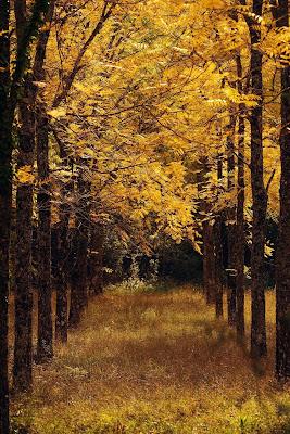 Giallo d'autunno di ilaria_bonamore