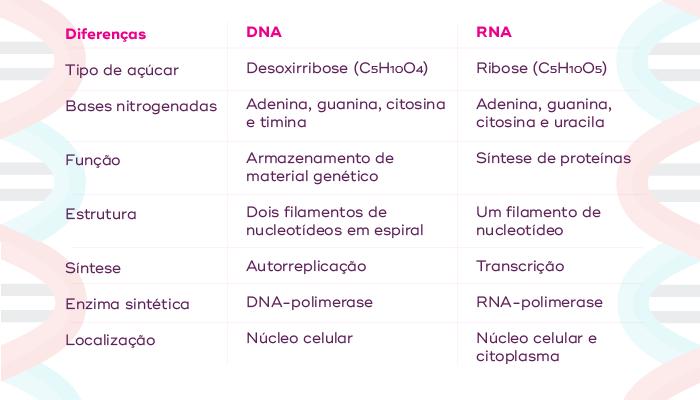 AS 7 principais diferenças entre DNA e RNA