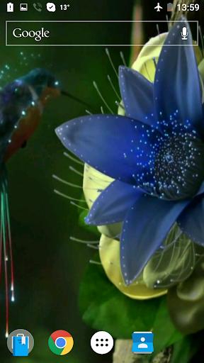 Hummingbirds4K映像を壁紙