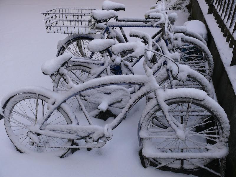 bici di nullo54