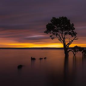 Tenby Point, Victoria, Australia by Linda Brown - Landscapes Sunsets & Sunrises