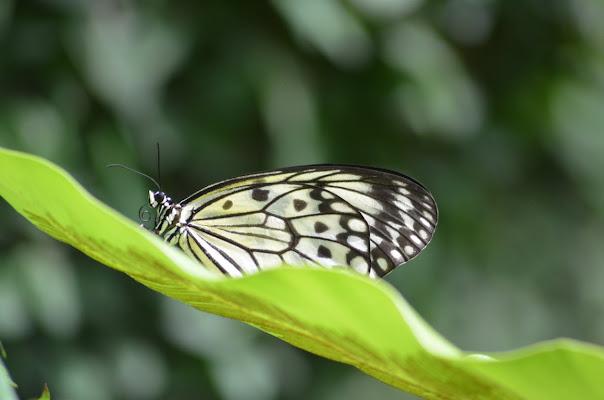"""...metti un giorno a """"Butterfly Park""""... di Simo10"""