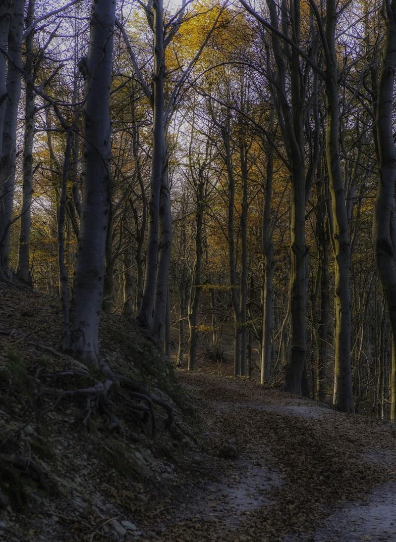 Luci calde nel bosco d'autunno... di Gianva