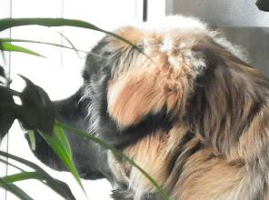 Photo: Camouflage derriere les plantes vous ne voyez pas, hein
