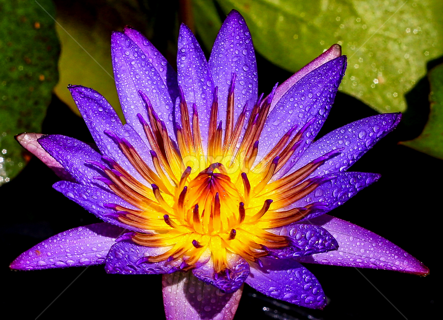 by Edwin Teow - Nature Up Close Flowers - 2011-2013