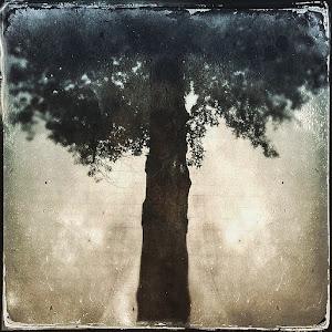 tree at the wall 2 IMG_2879.jpg