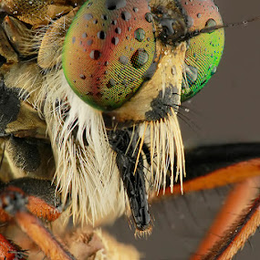 Get Wet by Bobby Worotikan - Animals Insects & Spiders ( wet, cute, robberfly )