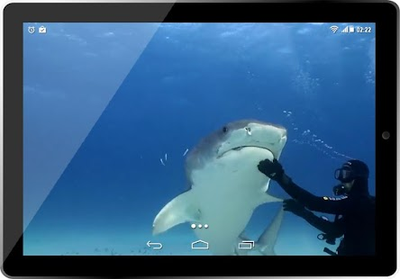 Real Tiger Shark 3D HD LWP for PC-Windows 7,8,10 and Mac apk screenshot 4