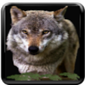 Wolf Howl icon