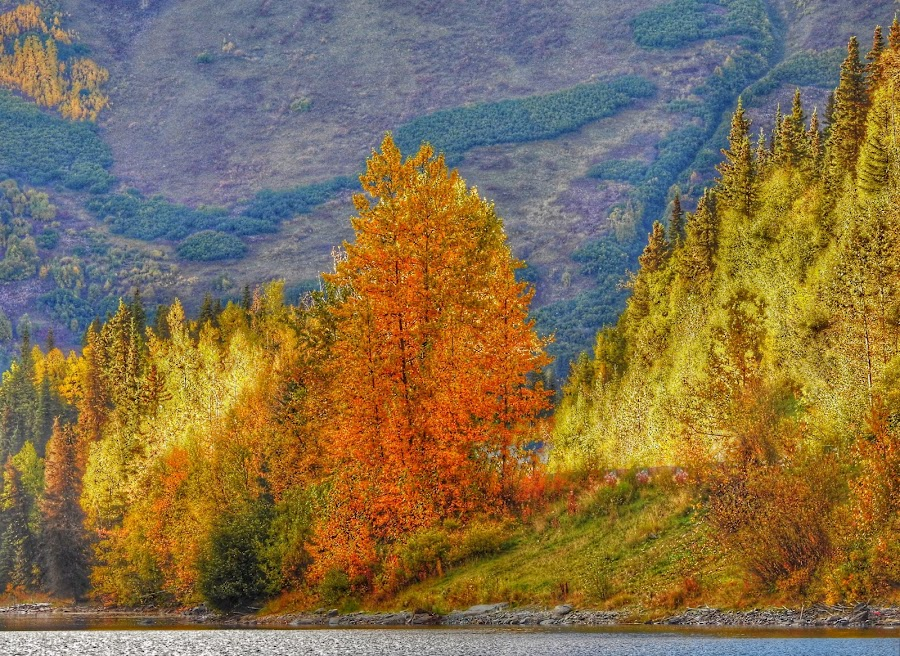 At The Edge of The Lake by Patricia Phillips - Landscapes Travel ( autumn colors alaska )
