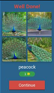 Birds Quiz - náhled