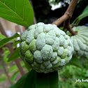 Atis (Sugar Apple)