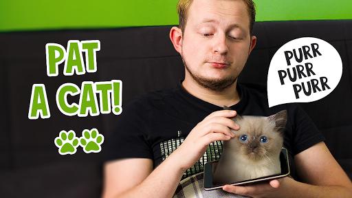 Pat 고양이