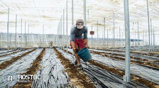 Humus de lombriz como el inoculador de vida más eficaz para el invernadero