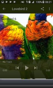 Lovebird Gacor - náhled