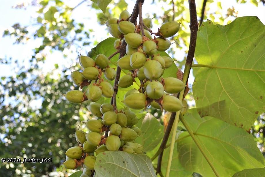 Foto Jardín botánico Fundación Sales 5