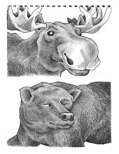 Photo: Moose & Black bear (pen & ink sketch)