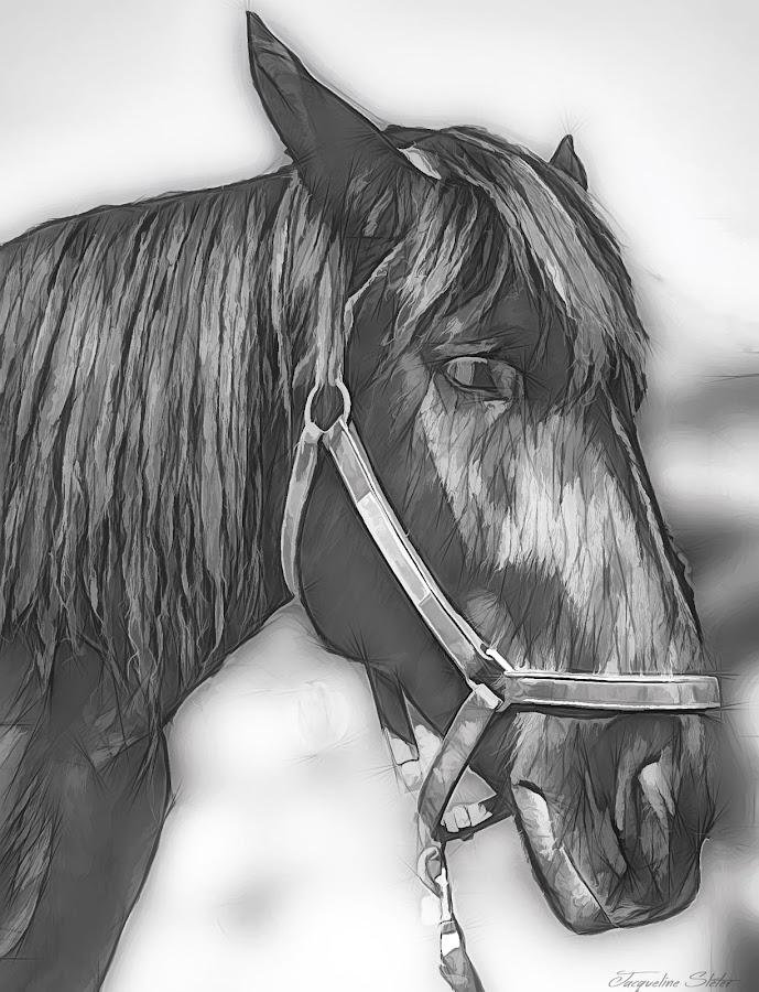 by Jackie Sleter - Painting All Painting ( horse, closeup )