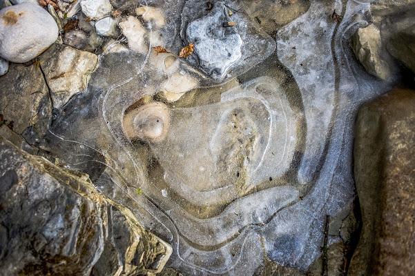 faccia di  camaleonte di ghiaccio di antoniosm8
