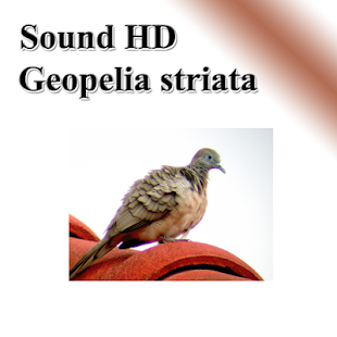 Java dove per bird - náhled